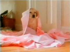andrex-puppy3